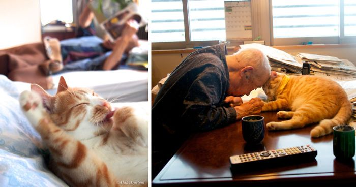 After My Grandpa Got Sick, I Brought A Cat And He Turned His Life Upside Down | Bored Panda