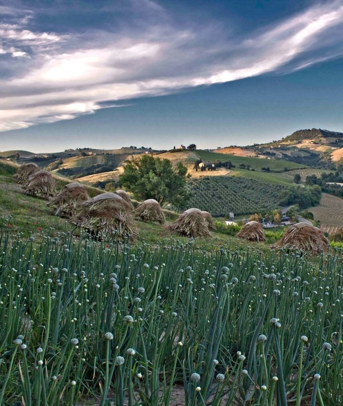 Travel to The Marche Region of Italy
