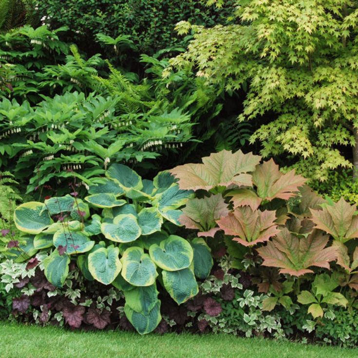 Plant this look - Great Foliage Border Plants - Sunset