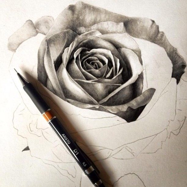 Black and white rose sketch #art #pencil #pen #drawing # ...