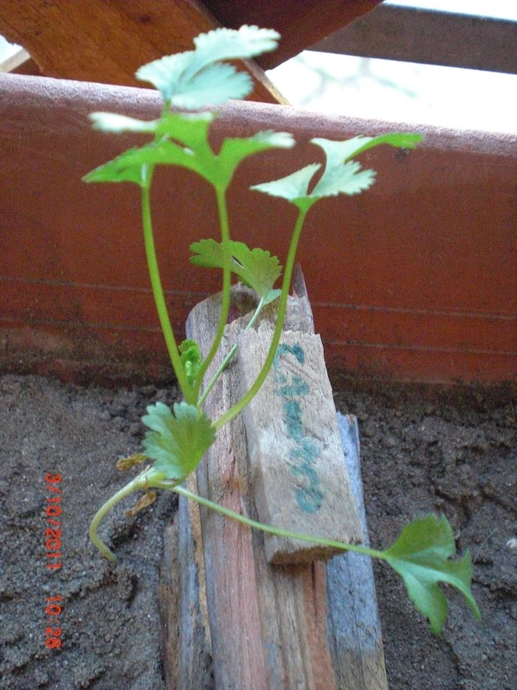 organic gardening want to know more click on the image