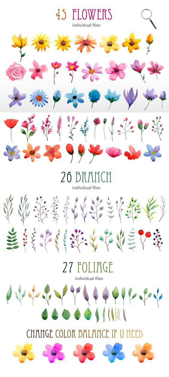 Flower examples for painting. Watercolour elements. Create wreath by Smotrivnebo on Creative Market: