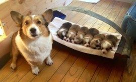 Pets – AwwThings.com