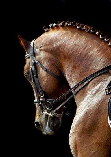 jjtackshack.com dressage horse