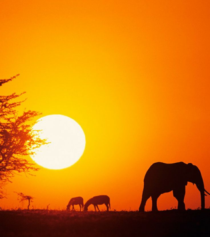 Most Popular Honeymoon Destinations Among the American Couples, Go on Safari in South Africa