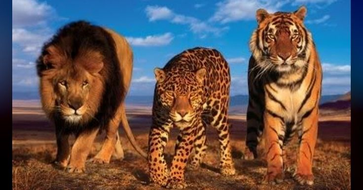 What's animal spirits?