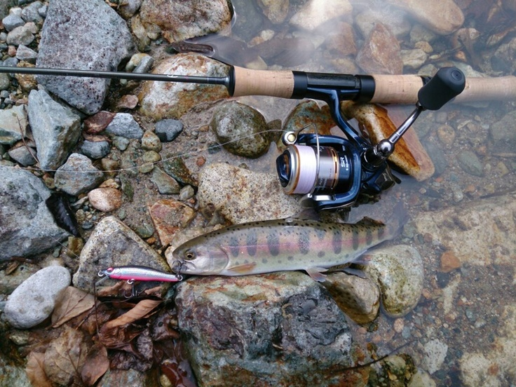 83 best high sierra fly fishing images on pinterest for Sierra fly fishing