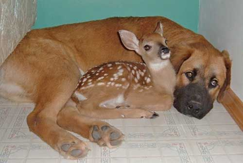 "its a baby deer ...ummm i mean a fawn => SOURCE: @Bendrix ""Furry Kidlings .ME"" Board via."