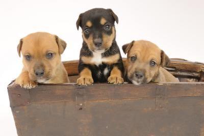 Cómo hacer una caja de parto para perros | eHow en Español