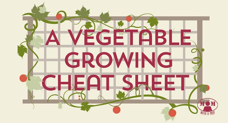 A Vegetable Planting Cheat Sheet Infographic - Mom with a PREP