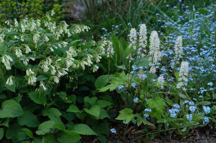 Planter sous les arbres arbustes et fleurs pour floraison toute l 39 ann e plante jardin - Plantes pour jardiniere toute l annee ...