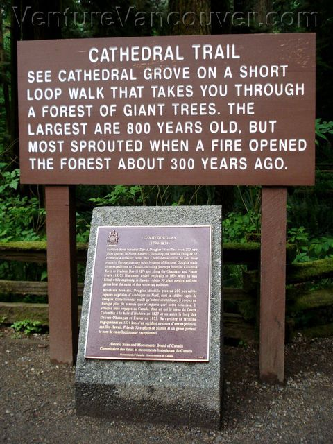 Cathedral Grove, located in MacMillan Provincial Park, is one of the most accessible stands of giant Douglas fir trees on Vancouver Island #Parksville