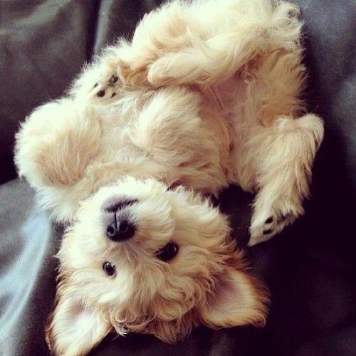 Cachorro Peludo | Los 33 animales más esponjosos del planeta