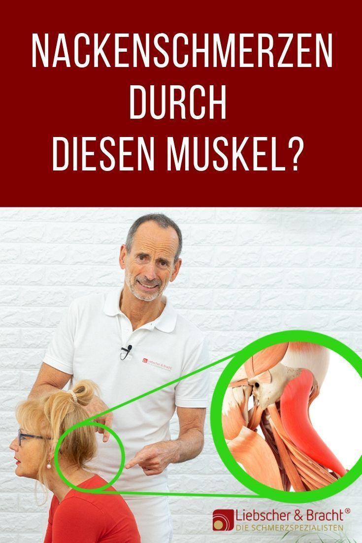 Nackenschmerzen durch diesen Muskel!