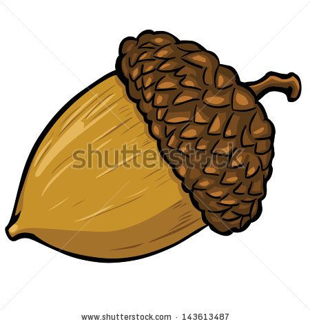 Acorns Stock Photos, Images, & Pictures | Shutterstock