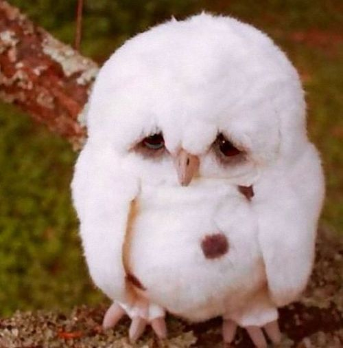 oh little owl you seem sad today.....
