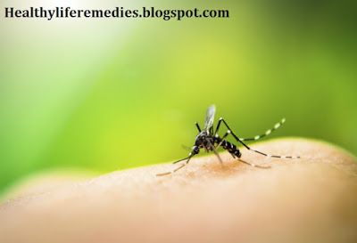 Best Ways to Prevent Insect Bites and Infections