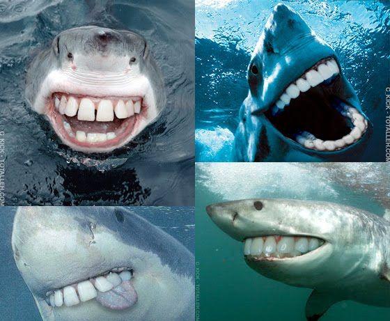 A shark becomes less credible with human teeth