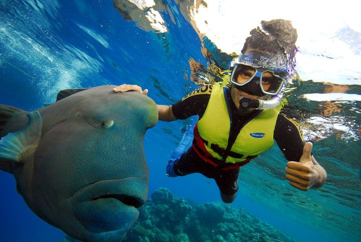 Explore the Great Barrier Reef with Silverswift Great Adventures, or make your trip to Cairns an adventure and upgrade to one of Skydive Australia's awesome packages. Add in a skydive, bungee jump or day of river rafting day. #SkydiveAustralia #bucketlist #summer #escape #holidays #travel #ideas #Australia