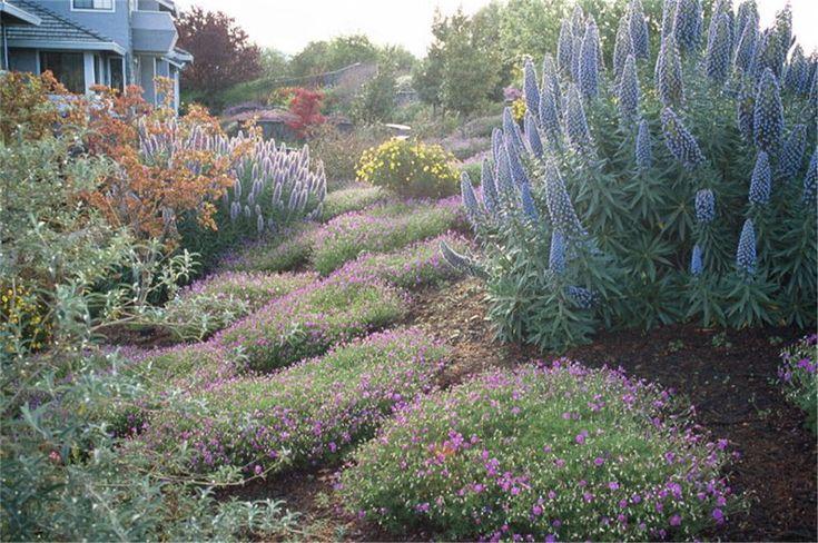 purple xeriscape   Tour: California Native Wonderland