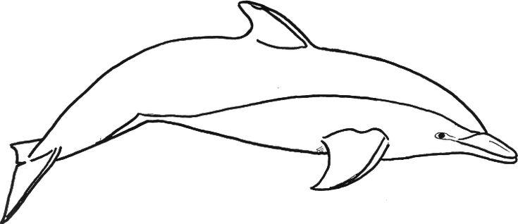 Dolphin Templates Printable Atlantic