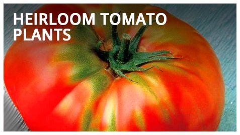Garden Seed | Vegetable Garden Seed | Garden Seed Catalog | Garden Seed Company  | Totally Tomato