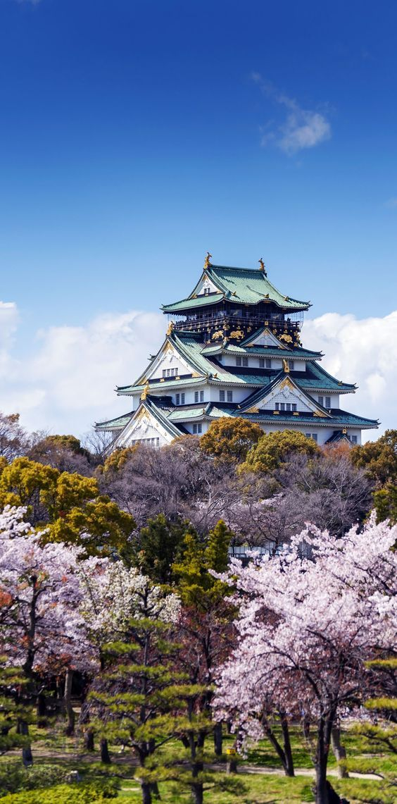 Amazing view of Japanese traditional castle with sakura blossom in Osaka, Japan. One of Japanese traditional products,Shachihoko is located on the top of the roof.