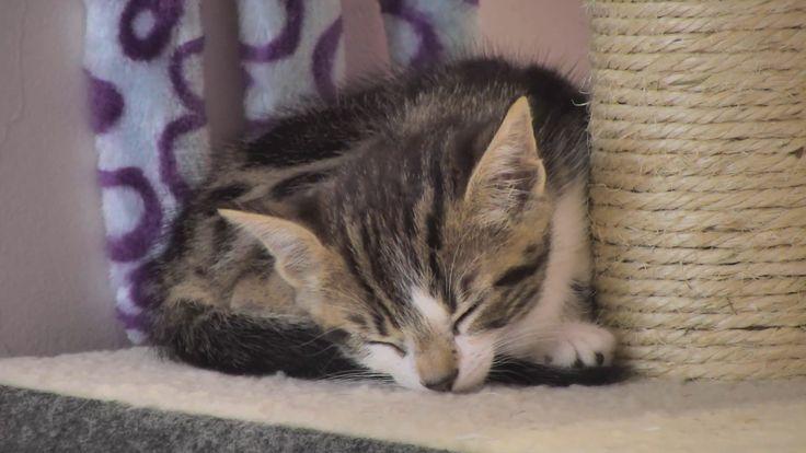 Kitten Cam - Rescue Sanctuary