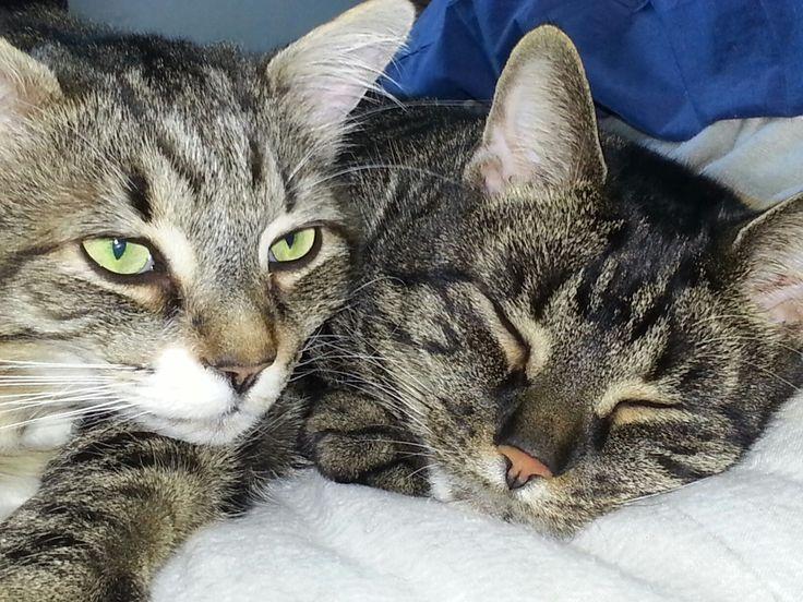 Two sleepy heads