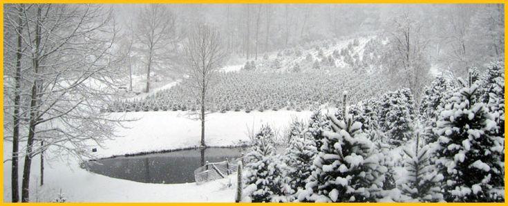 Cornett and Deal Christmas Tree Farm - NC Christmas Tree ...