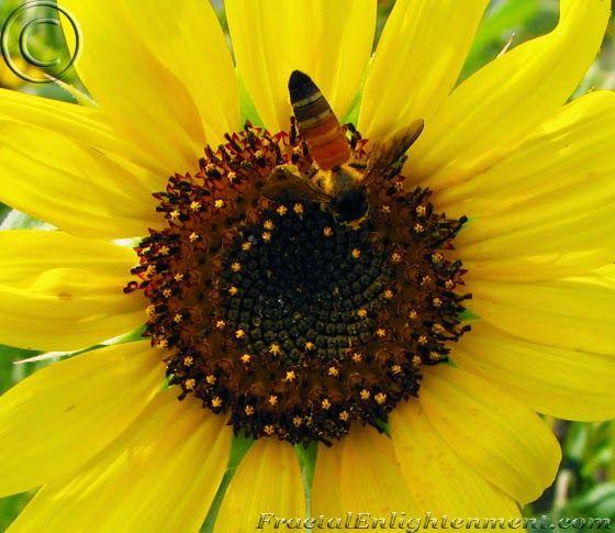 Understanding The Fibonacci Sequence & Golden Ratio