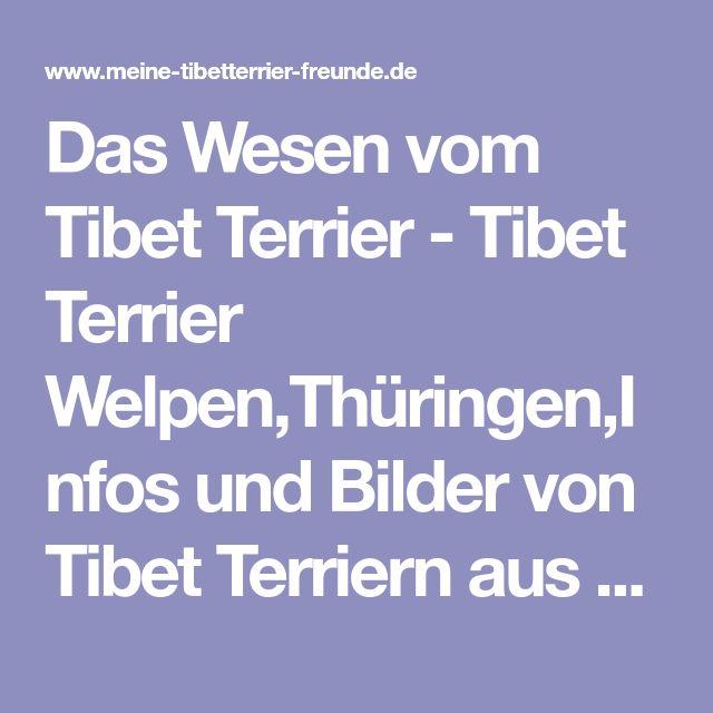 Das Wesen vom Tibet Terrier - Tibet Terrier Welpen,Thüringen,Infos und Bilder von Tibet Terriern aus Thüringen,