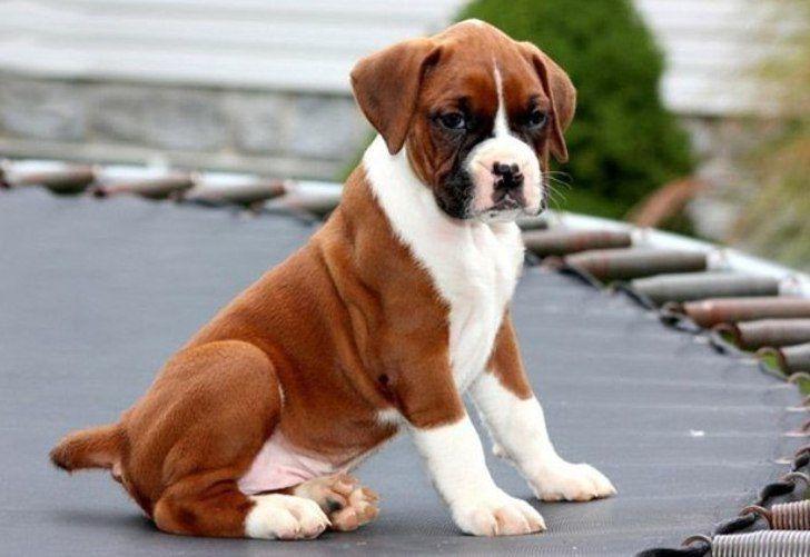 Забавный случай про пса, гаражные ворота и преодоление препятствий...)