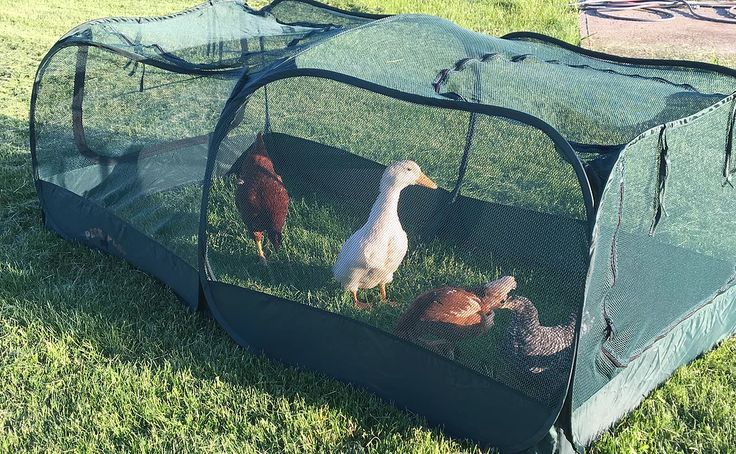 25 best ideas about chicken enclosure on pinterest for Chicken enclosure ideas