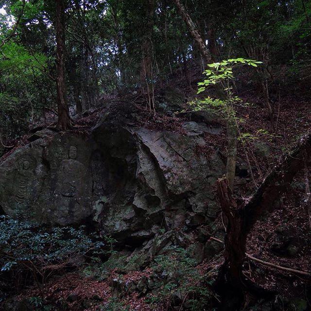 【bokunara】さんのInstagramをピンしています。 《幼木と石仏。 春日山原始林は人が関わりながら原生的な森が残されて来ました。 所々にある石仏がそれを伝えます。  11/26(土)神山をきく世界遺産春日山原始林さんぽ 彩編 まだまだ参加者募集中です。 ■お申し込み方法 奈良市観光協会の申し込みページよりお願いします。 http://narashikanko.or.jp/genshirin/  #エコツアー #トレッキング  #自然 #森 #色 #五感で感じる #秋 #キノコ #世界遺産 #春日山原始林 #奈良 #癒し #オーガニック #日本の伝統色 #石仏》