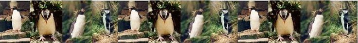 3 excellent penguin science activities:  how they keep warm, how they carry their eggs and comparing penguins to other birds