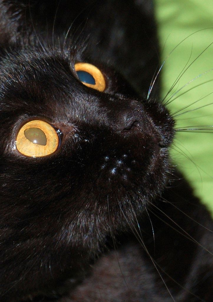 362 Best Images About Black Cat Meow On Pinterest Cats Kitty Cats And Be