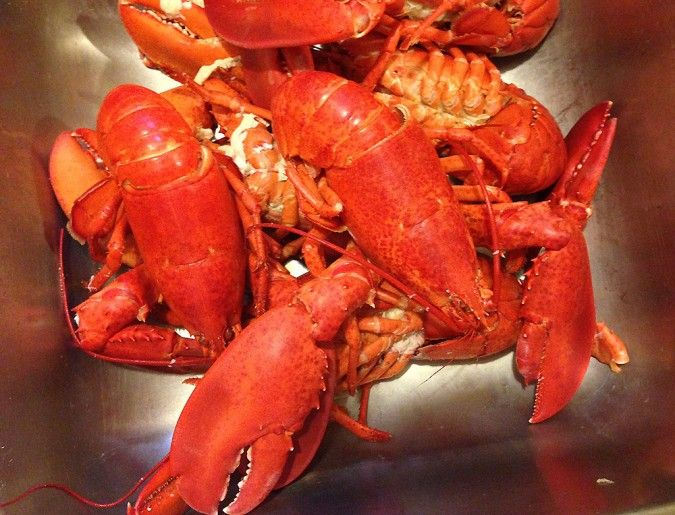 ... Lobster Love on Pinterest | Lobsters, Lobster Rolls and Lobster Bake