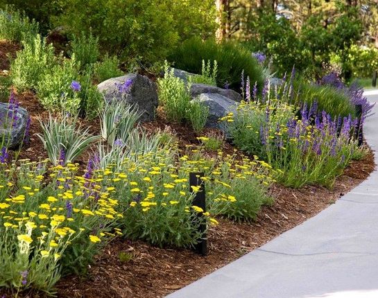 25+ Best Ideas About Water Wise Landscaping On Pinterest | Water