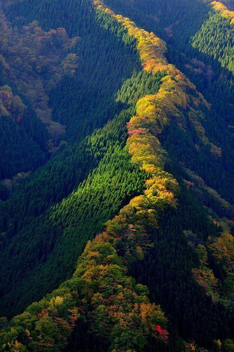 Maple trees along a ridge in Japan Say Yes To Adventure