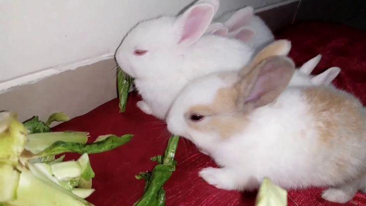 baby bunnies eating cauliflower leaves,,so cute     #Babies, #BabyBunny, #BabyRa…