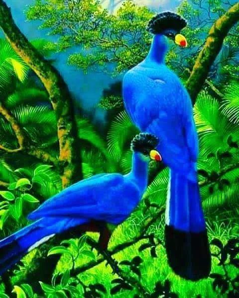 Fotoğraf - INCREDIBLE!! - SUCH BEAUTIFUL BLUE COLOURING!! - SO BEAUTIFUL!!