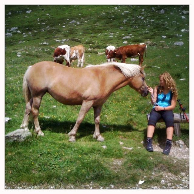 Sweet adventure // @wivercz #austria #horse
