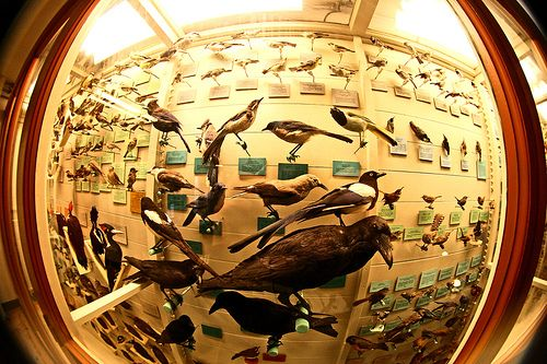 Natural history museums are so cool -Harvard Natural History Museum-