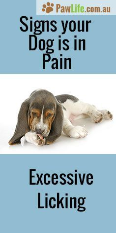 It's never easy seeing your furbaby in pain. Here are 6 common signs your dog is in pain