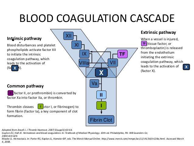 385 best mls images on pinterest gym career and nursing schools blood coagulation cascade fandeluxe Images