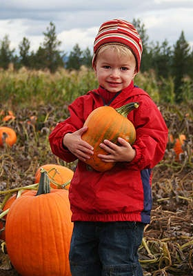 KC Pumpkin Patch 2 for $10