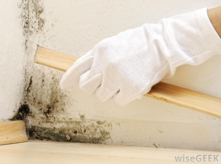 How Perfectly Get Rid Mold And Mildew Once For