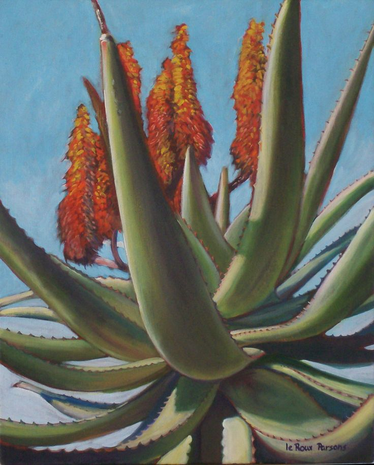 Yet ANOTHER aloe ferox. They really are such a challenge to paint. Those leaves are complicated, and I always seem to leave one out in the drawing stage, which drives me mad. SOLD