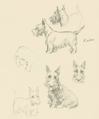 This original antique Scottie Dog print, is from a series of well know portraits of dogs drawn by Lucy Dawson and published in the 1930s. The Scottie Dog print that I have here is very typical of her artistic style and she really draws out the character of a Scottie Dog in this sketch, no pun intended!